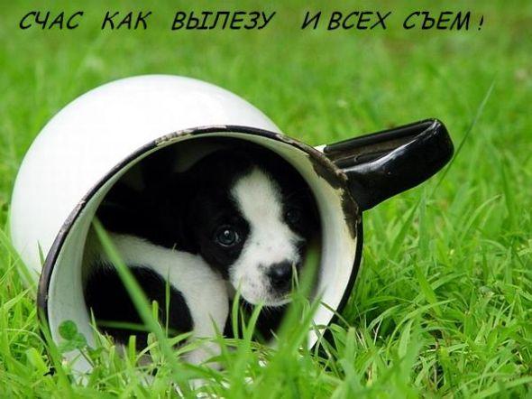 http://arhitekton.infobox.ru/pictures/001.jpg
